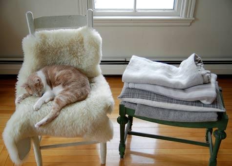 квартира,фото,дизайн, кресло,пол,стул,столик,кошка