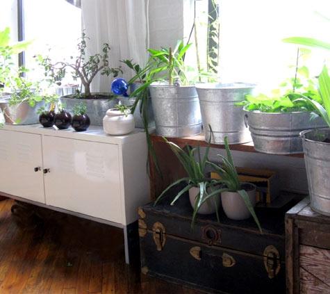 цветы,растения, подоконник,горшок,гербарий, домашние растения, ведра