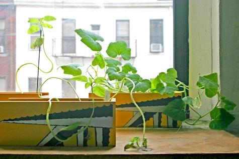 цветы,растения, подоконник,горшок