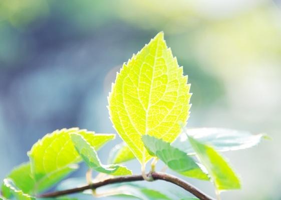 листок,солнце,дерево