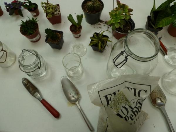 банки,террариум,растения,камешки,ложка