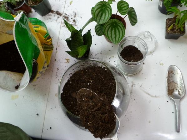 банки,террариум,растения,камешки,ложка,уголь,почва