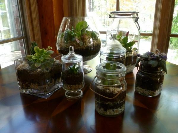 банки,террариум,растения,камешки,ложка,уголь,почва,ножницы,корни,сделай сам,инструкция.