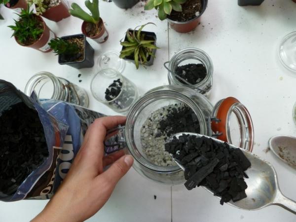 банки,террариум,растения,камешки,ложка,уголь