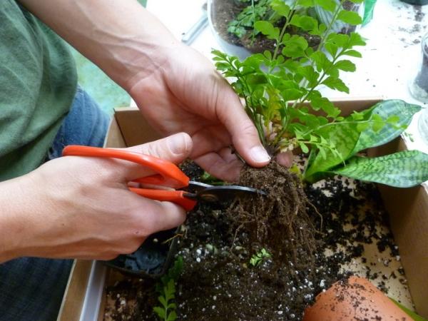 банки,террариум,растения,камешки,ложка,уголь,почва,ножницы,корни