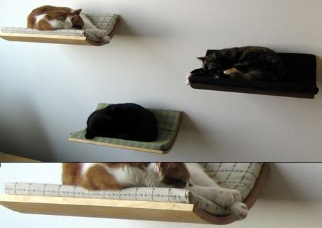 будка,домашние животные,кошка,место,питомцы,собака