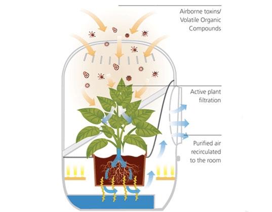 гаджет,купить,очиститель воздуха,фильтр.растение