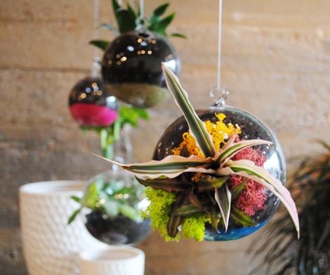 банка,дизайн,зелень,идея,растения,цветы