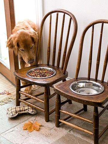 стул,миска,миски для собак,сделать сам