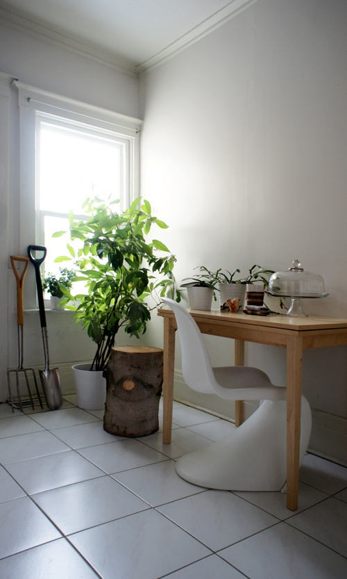 дерево,бревно,пень,дизайн,интерьер,окно