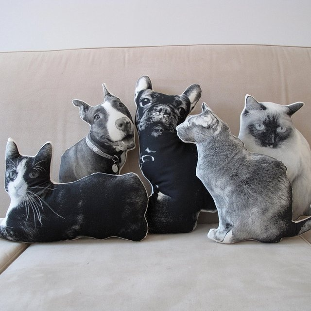животные,кошка,собака,подушка для собак