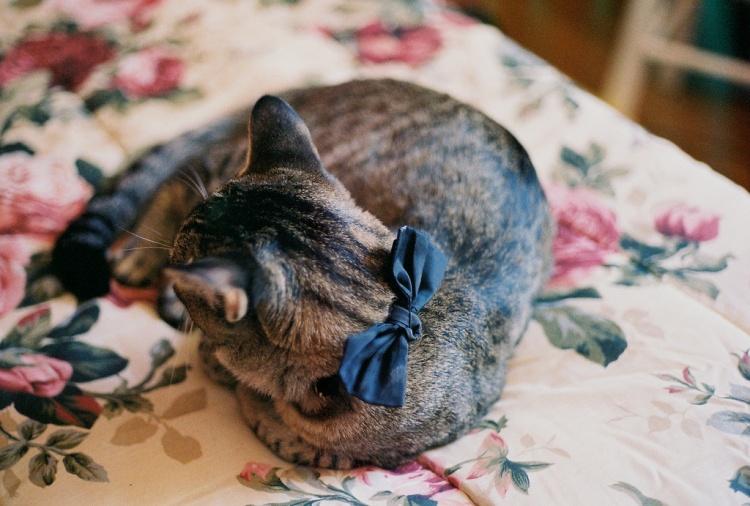 кошка,бантик,цветочное одеяло
